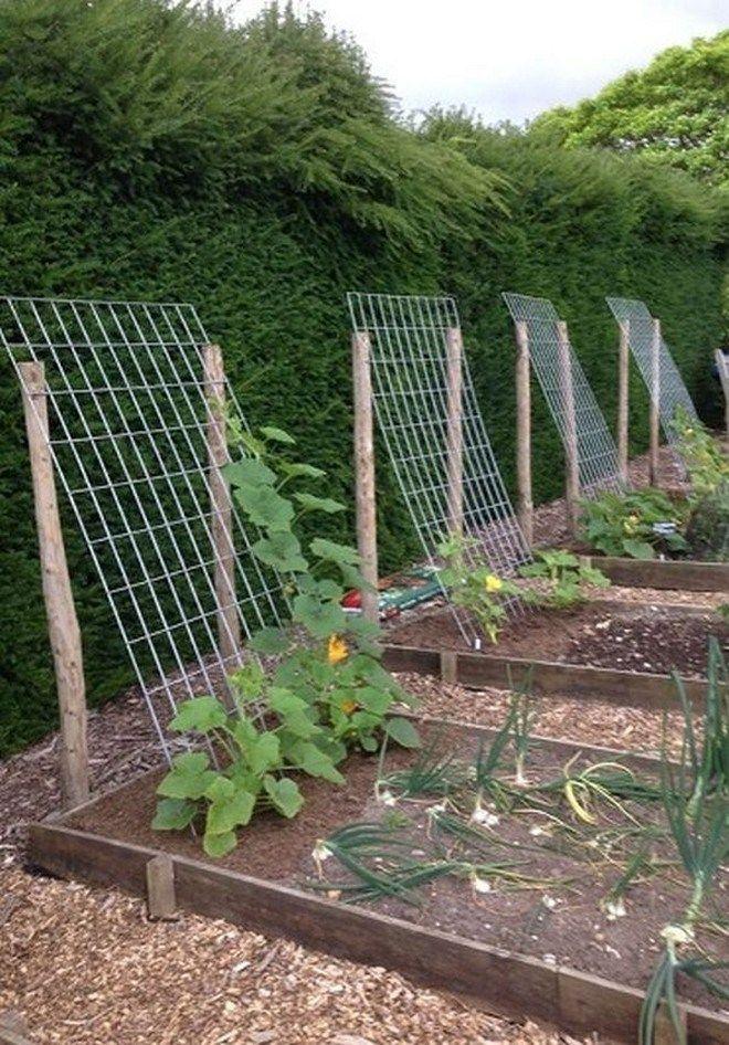 câștigurile din grădina de legume pe internet cum și unde să câștigi bani repede rapid