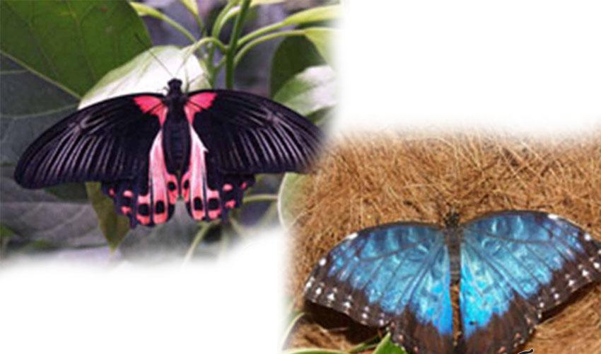 control opțiune fluture