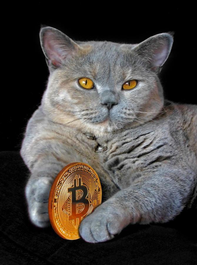 cât bitcoin hash de informații bitcoin