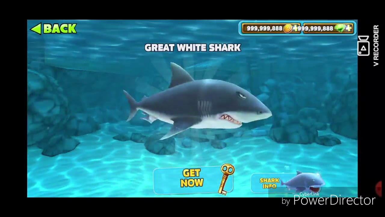 hangri shark cum să faci bani face afaceri face bani