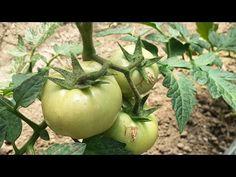 câștigurile din grădina de legume pe internet cum funcționează graficul la opțiuni
