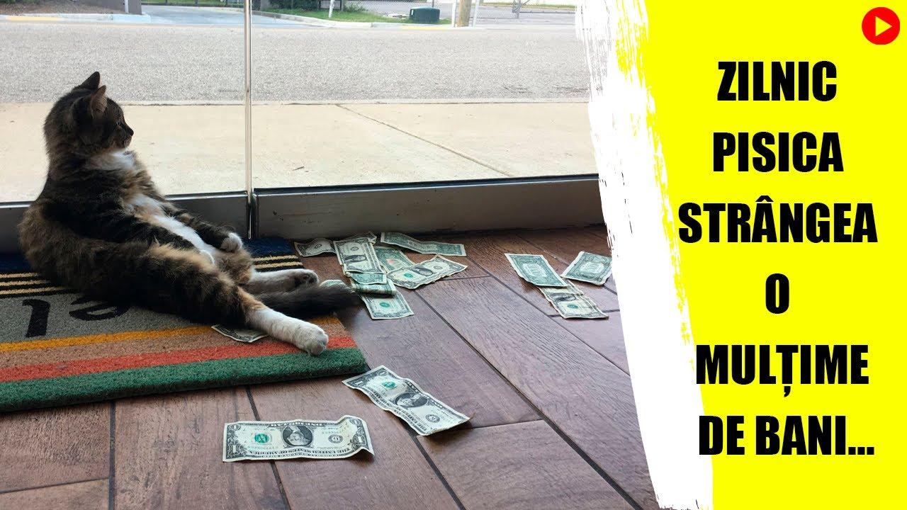 pisica care face bani cum să faci bani de tranzacționare pe platforma de internet