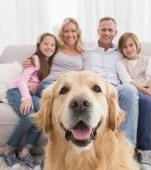 10 motive pentru a adopta un câine din adapost – Registru caini
